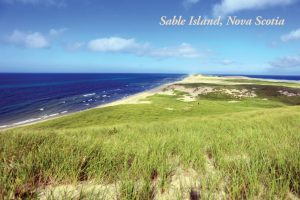 SableIsland-Postcard-2