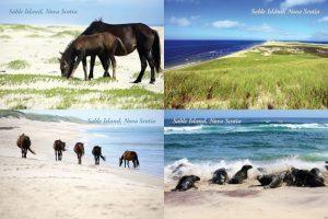 SableIsland-Postcard-Set